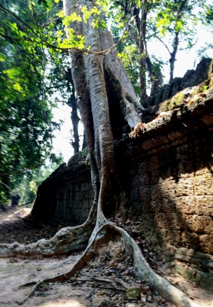 CAM34_Tree_on_ancient_wall.jpg